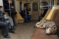 commuter dog