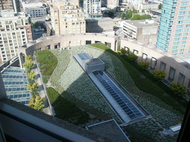 Green Roof at Library Square