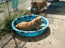 Nicky's pool