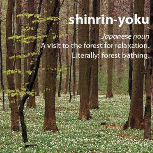 shinrin-yoku forest bathing