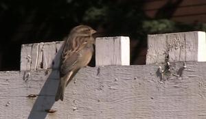 fence birdie