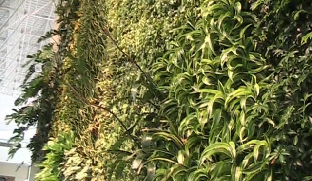 Guildfor Mall vertical wall garden