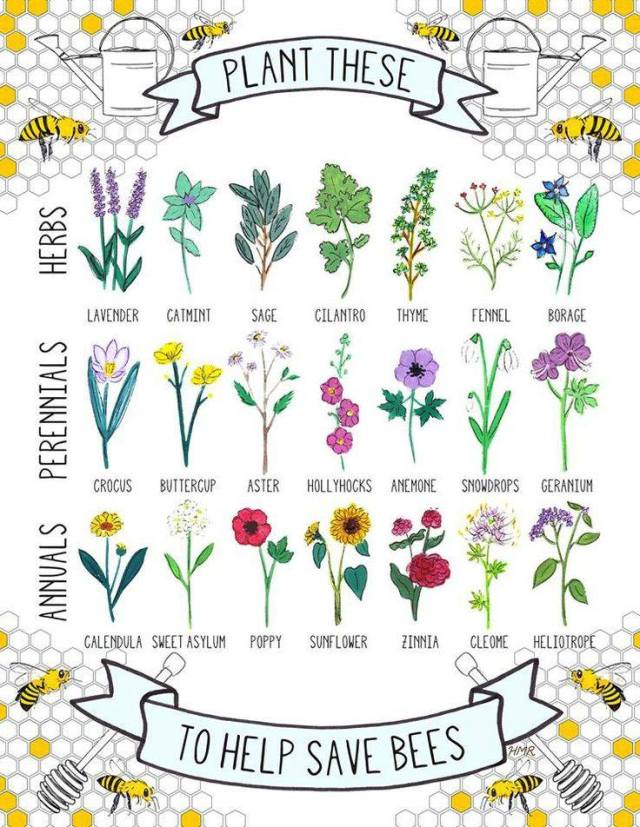 http://thehomesteadsurvival.com/grow-theses-plants-save-bees/ Grow Theses Plants To Help Save Bees ! You can grow these plants to help save these important pollinators. Every 3rd bite of food you eat is grown is pollinated by a bee !