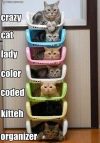 color coded kitteh organzier