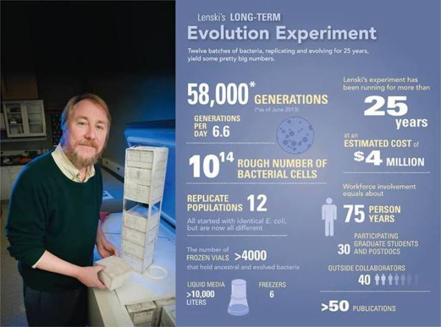 The latest results from Lenski's long running evolution experiment have been published: http://bit.ly/I1CDls Image credit: G. L. Kohuth/Michigan State University (2009) / Data Source: R. Lenski, via Science.