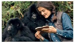 Dian Fossey with gorillas