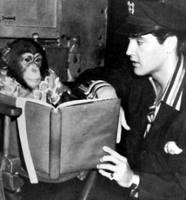 Elvis chimp