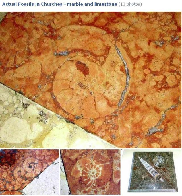 Church Fossils