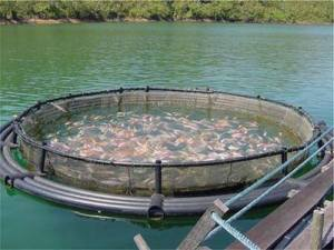 fish farm pen
