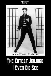 Cutest Jailbird