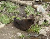 bears01