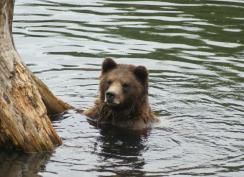 bears09
