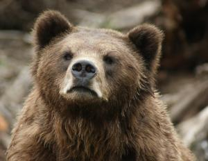 bears21