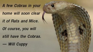 will-cuppy-on-cobras