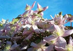 Floraobics Stanley Park Vancouver 2002 Nina Tryggvason