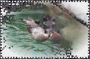 Otter Love by Nina Tryggvason
