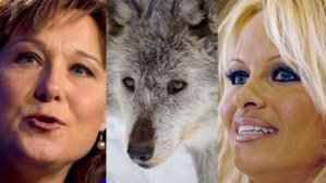 pamela-anderson-wolf-cull