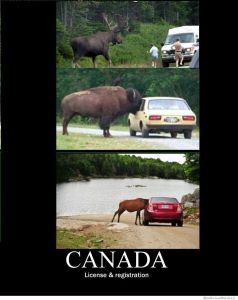 canada-license-and-registration