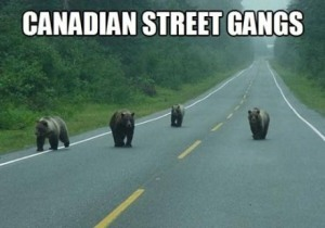 canadianstreetgangs