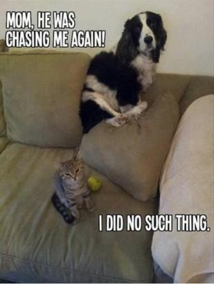 Cat-Dog-Meme-16