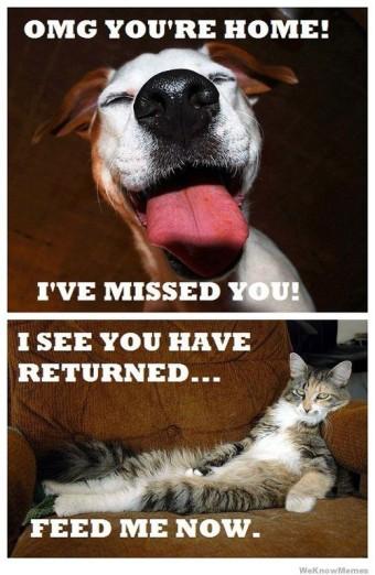 Cat-Dog-Meme-23