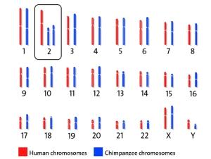 HumanChimpGenomes630