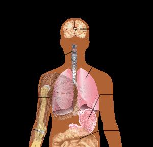 300px-Symptoms_of_swine_flu.svg