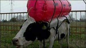 _44820050_cows512