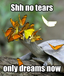 butterflies-drinking-turtle-tears