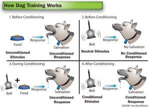 dog-training-18