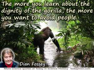 FosseyDian-Gorilla800px