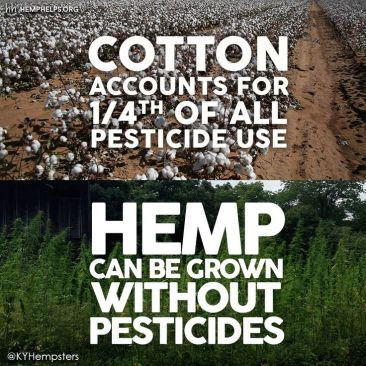 hemp-facts-meme-2