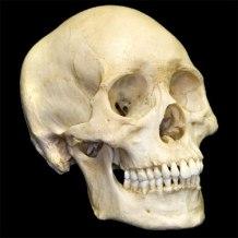 human-skull1