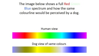 Dog colour vision1