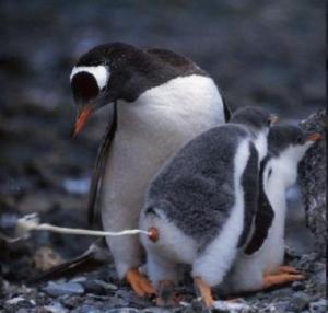 penguin-poop-28030-1246296207-11